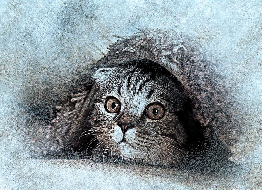 élethű macska rajzolás